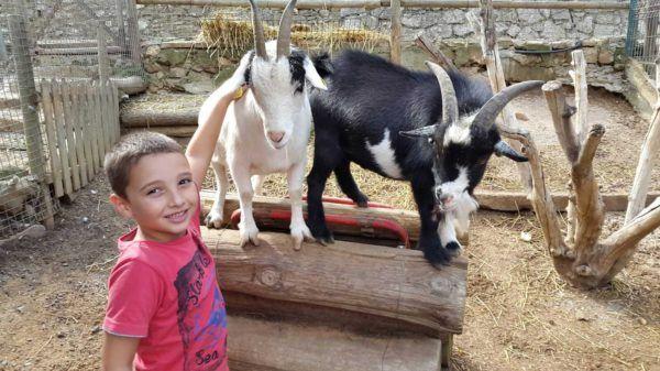 beneficis_contacte_animals_i_nens